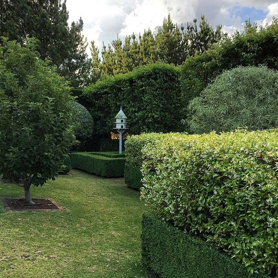 Hedge Trimming Service - Handy Hedge Trimming